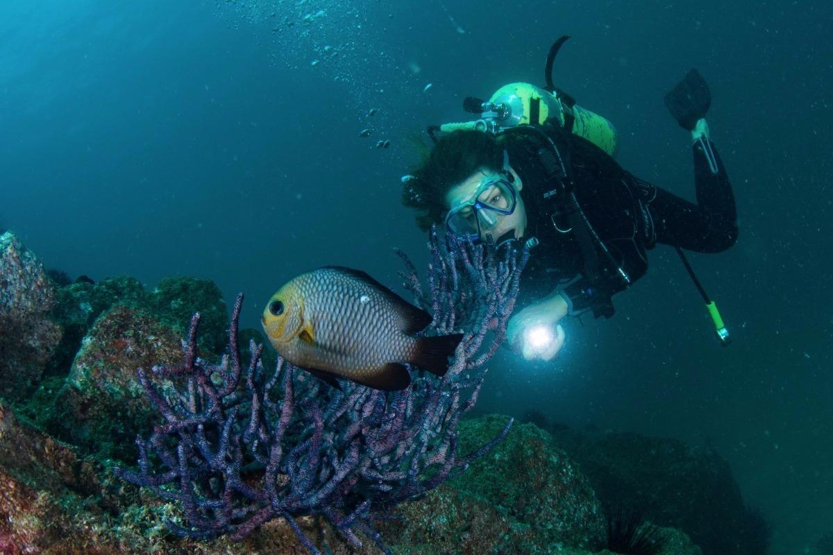 Dubai Wreck Diving – Divers Down UAE